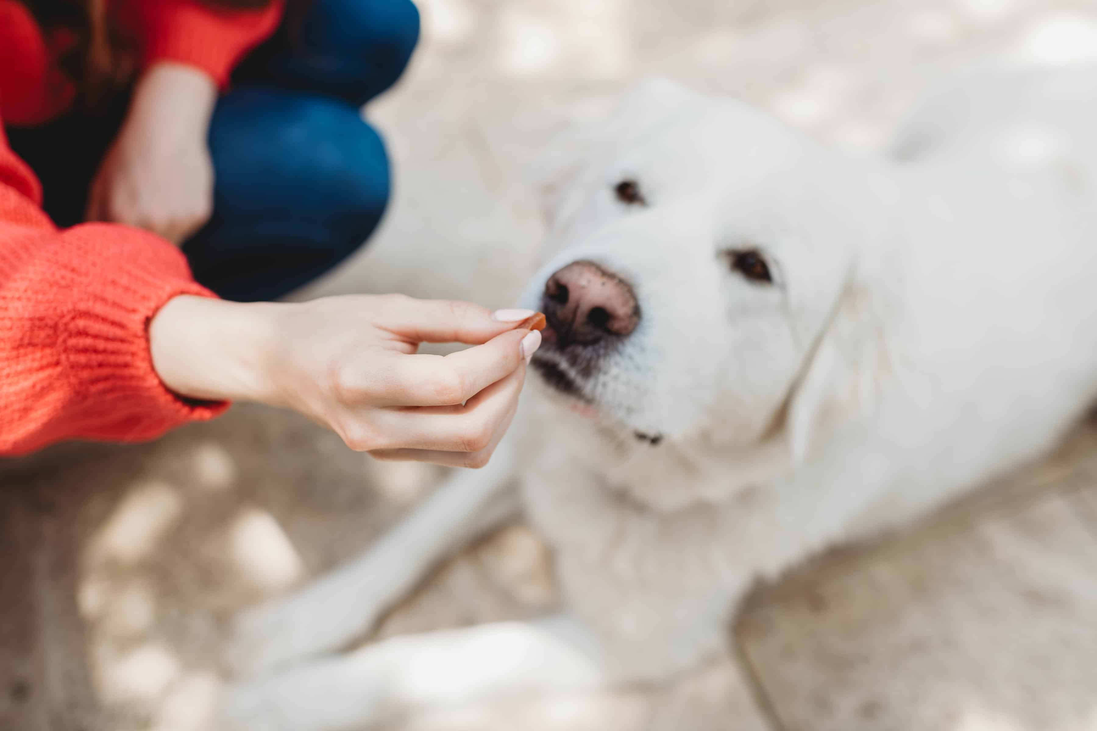 How to Find the Healthiest Dog Food