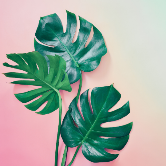 palm leaves on a pink gradient background