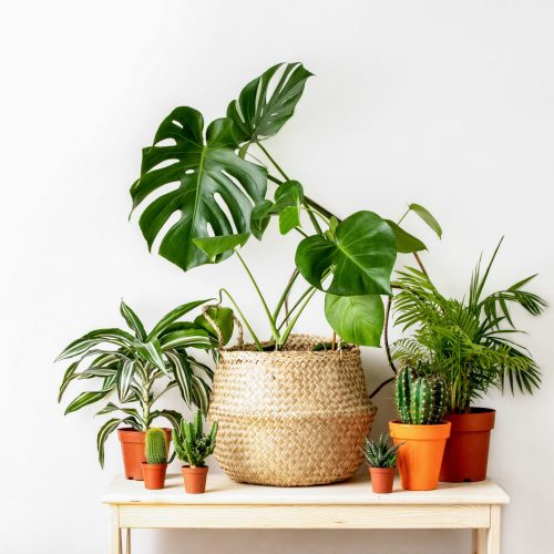 various houseplants sitting on a small table in front of a white wall